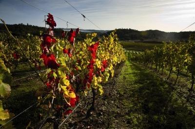 do pao ao vinho